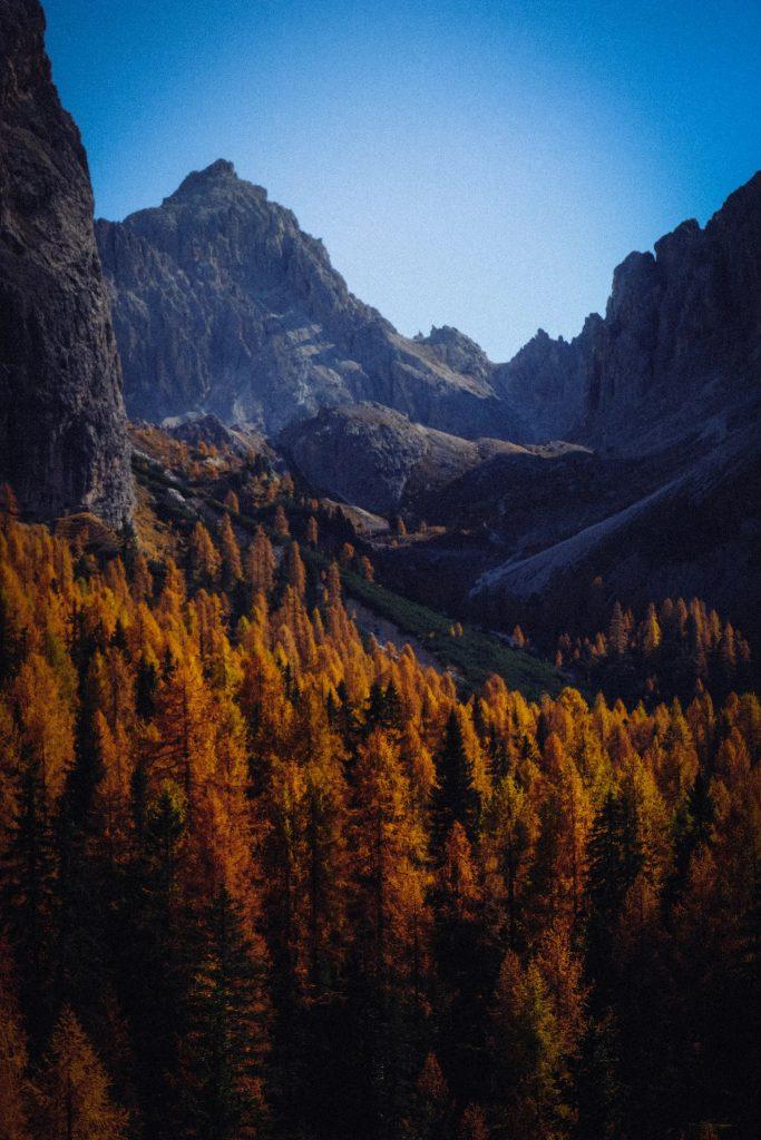 Foresta di larice sulle Alpi
