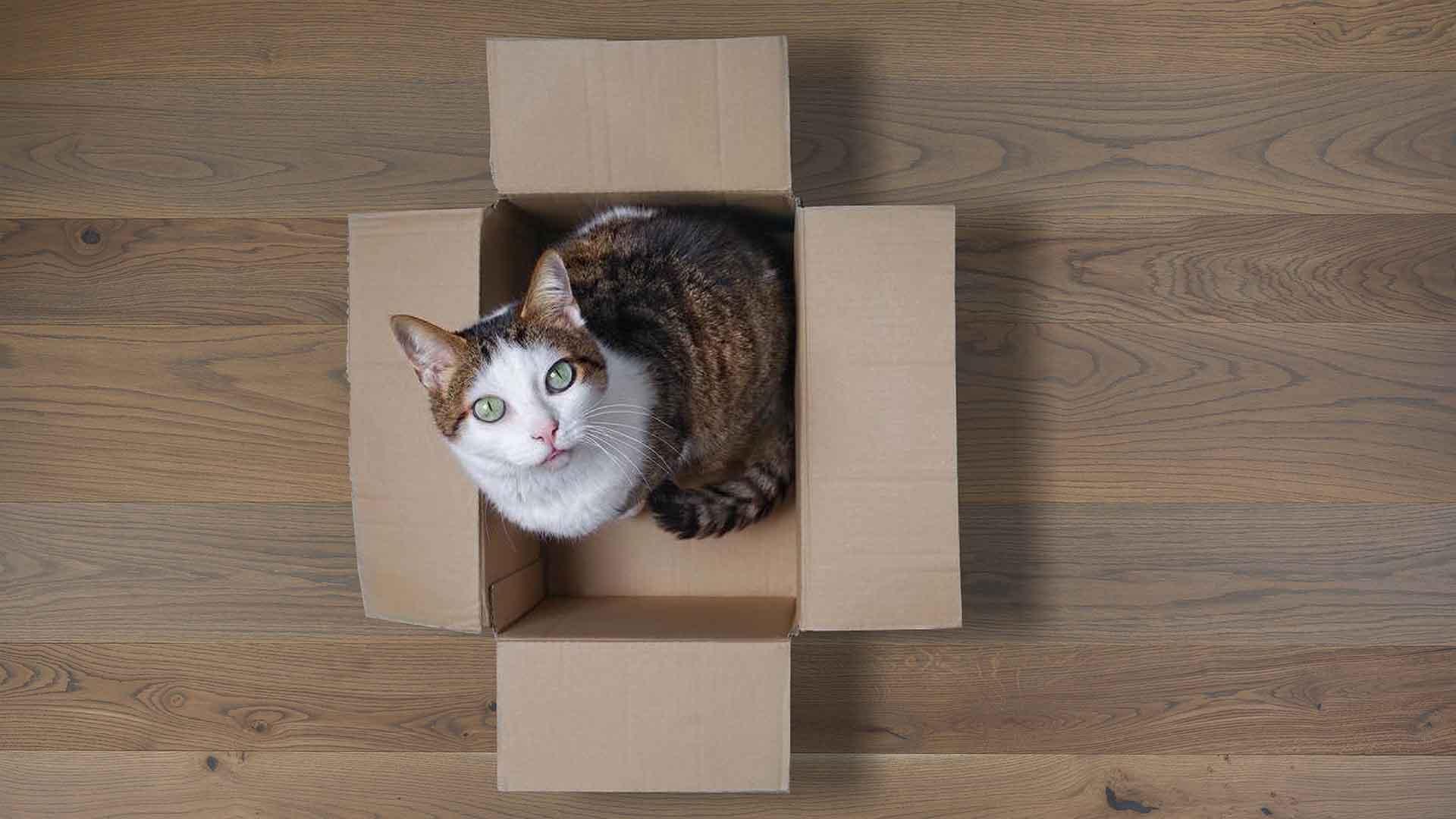 parquet-gatto-copertina